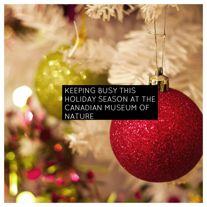 Holiday Activities At Canadian Museum of Nature
