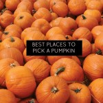 Best pumpkin patches for fall family fun